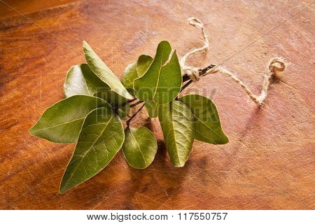 Laurel branch on wooden background