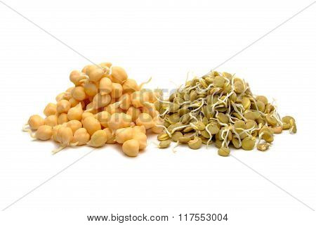 Fresh Beans And Lentil