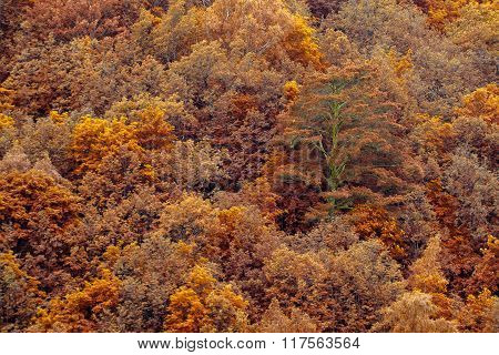 Orange Fall Forest Trees Texture Background. Nature Landscape