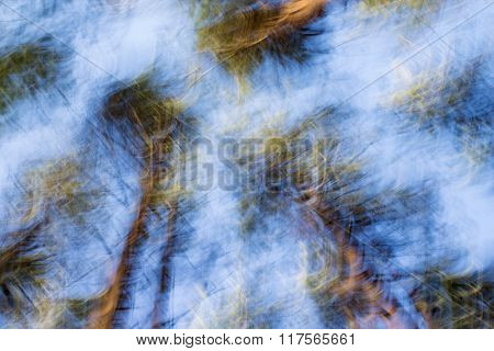 Abstract Blue And Green Blurred Background. Forest. Trees