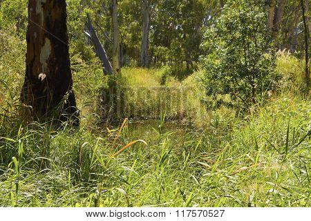 Lush Australian Billabong