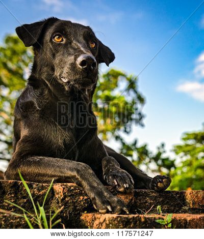 Black Guard Dog