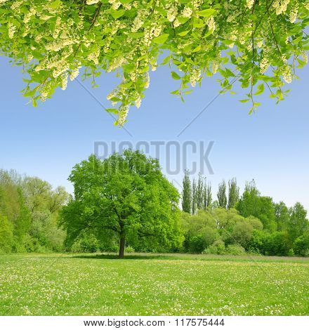 Spring landscape with flowering branch tree.