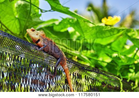 Cute Lizard In The Bushes Of A Tropical Island, Maldives.