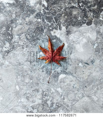 Dry leaf on a marble background