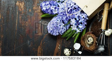 Spring hyacinth, easter eggs and garden tools on vintage wooden background