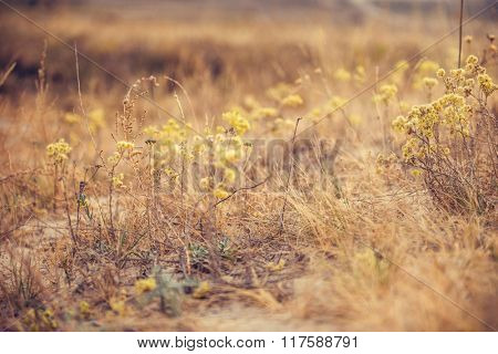different dry plants in wild field in autumn