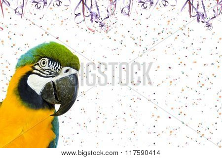 Pet Carnival - Brazilian Macaw on Carnival background