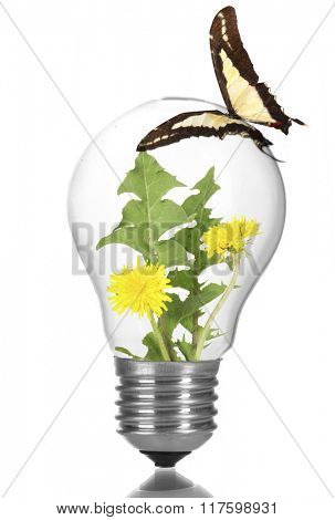 Colorful butterfly sitting on light bulb isolated on white