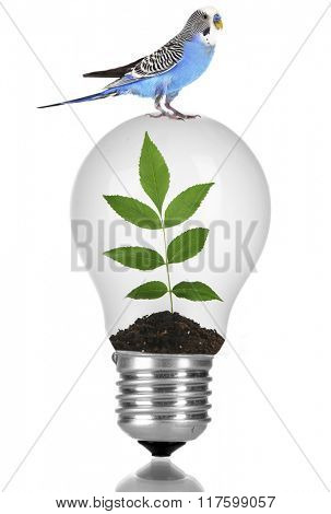 Little blue parrot sitting on light bulb with green plant isolated on white