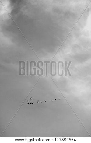 Thirteen Birds Flying In Sky, Black & White. Selective Focus.
