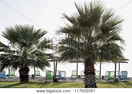 Big Palm Trees On A Beach At Morning Dawn