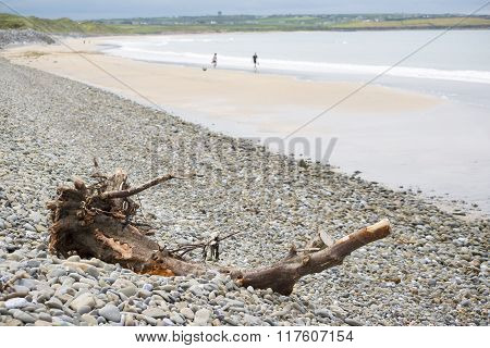 Driftwood On Pebbled Beach