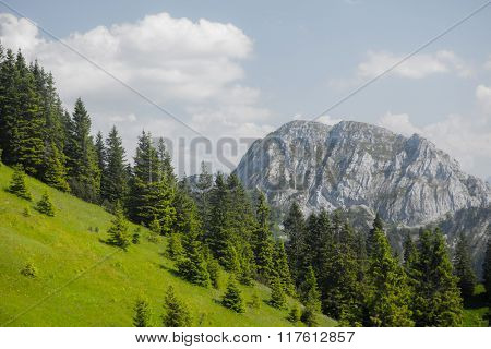 Green meadow with pine trees and mountain in a sunny day
