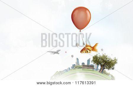 Goldfish fly on balloon