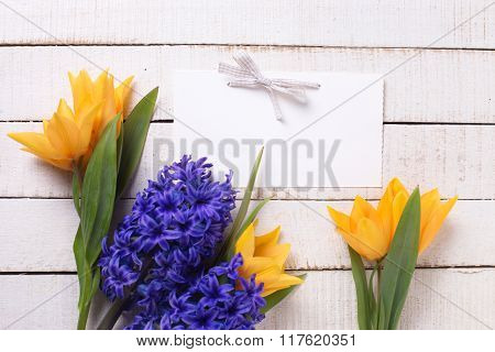 Fresh Yellow Tulips And Blue Hyacinths  Flowers  And Empty Tag On White  Painted Wooden Planks.