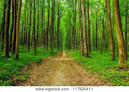 spring forest trees. nature green wood sunlight backgrounds. sky