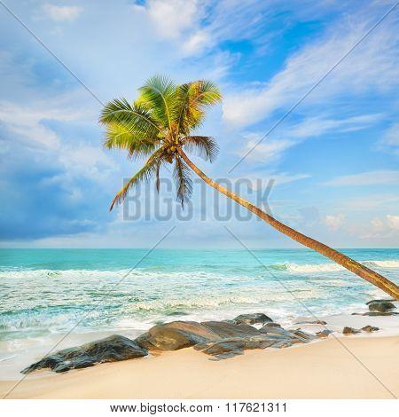 Palm trees over the sea. Sri Lanka