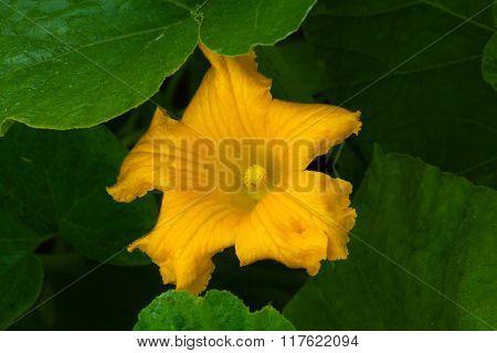 Blooming Gourd