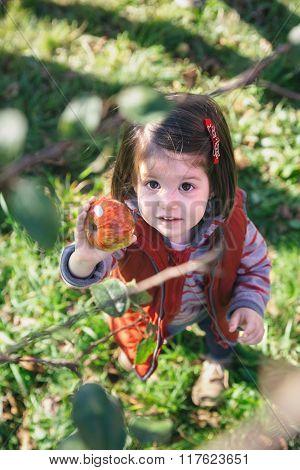 Little girl holding organic apple in her hand