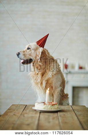 Birthday of dog
