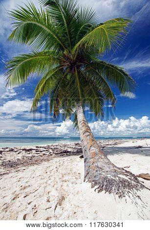 Saona Beach