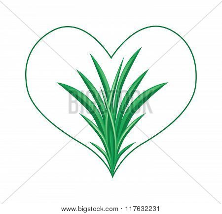 Fresh Pandan Plants In A Beautiful Heart