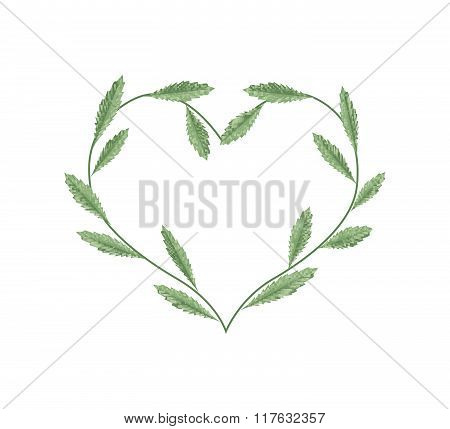 Fresh Green Leaves In A Heart Shape