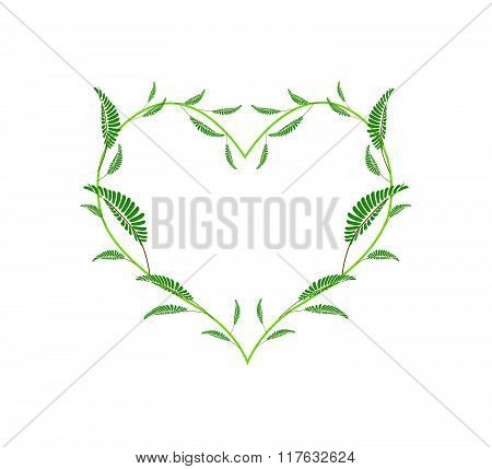 Green Leafy Leaves In A Heart Shape