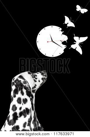 Dalmatian Looking At White Clock