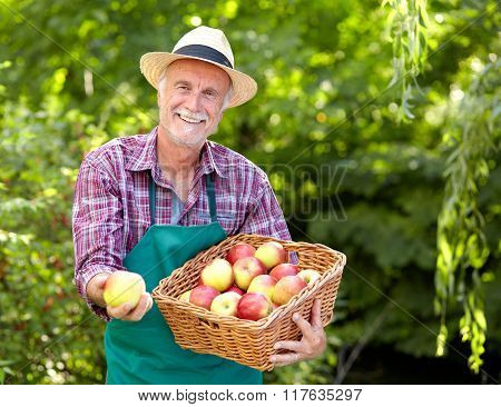 Gardener With Straw Hat Presenting An Apple