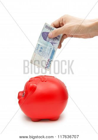 Hand Korea Banknote Into Piggy Bank Isolated On White Background