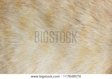 Animal Skin A Cat Pattern Background