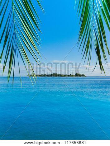 Concept Heaven Palm