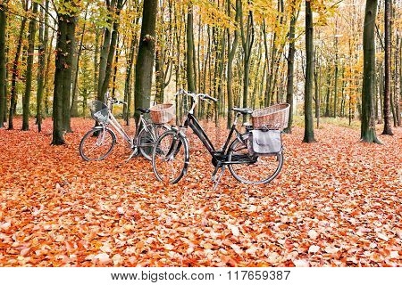 Bikes in the forest from the Netherlands in fall