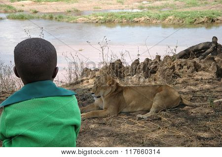 The child and the lioness - A child observes a lioness in the savannah of Tanzania - Africa