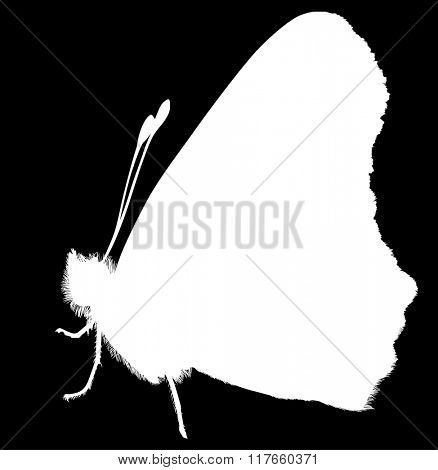 illustration with butterfly silhouette isolated on black background