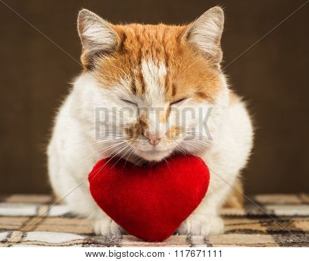 Two-color ginger cat meditates beside lies plush toy heart.