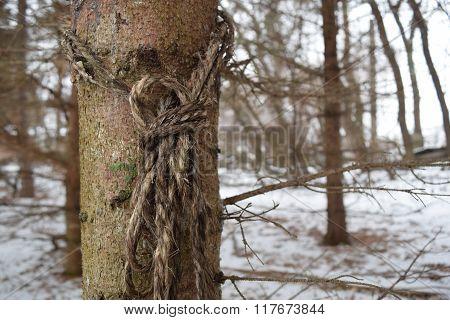 Knot on tree