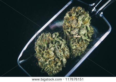 Medical marijuana dried flowers on glass scooper isolated on black
