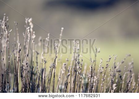 Plants with soft focus background