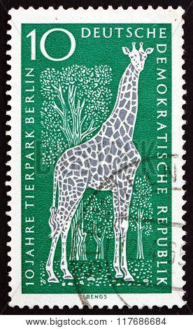 Postage Stamp Germany 1965 Giraffe, Mammal