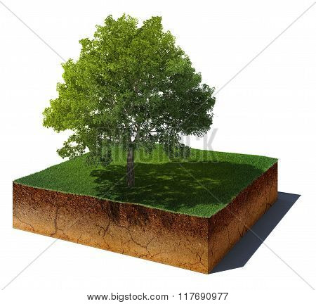 Dirt Cube With Tree Isolated On White Background