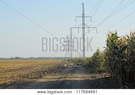 Power Poles Near The Cornfield