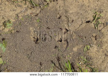 Log In Earthen Nest Of Ants