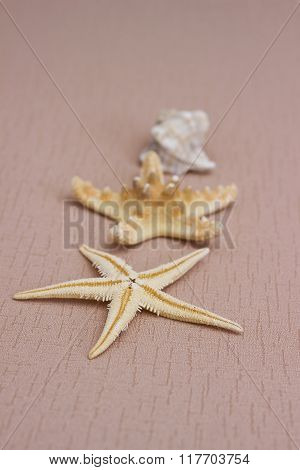 Summer Background: Starfish On The Biege