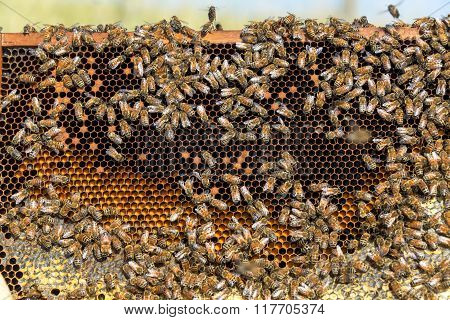 View Of A Beehive