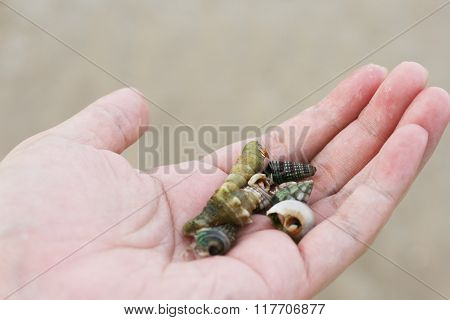 Hermit Crabs and Shell on a Hand