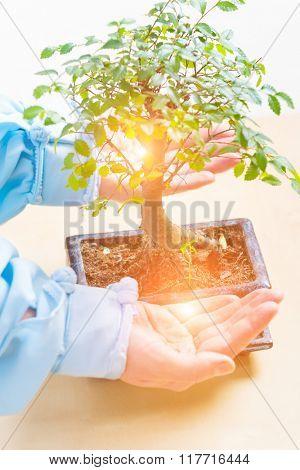 Beautiful bonsai tree with waman's hands