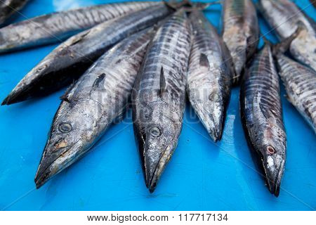 Fresh Raw Barracuda Fish In Market